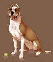Staffordshire Terrier by Mr-SKID