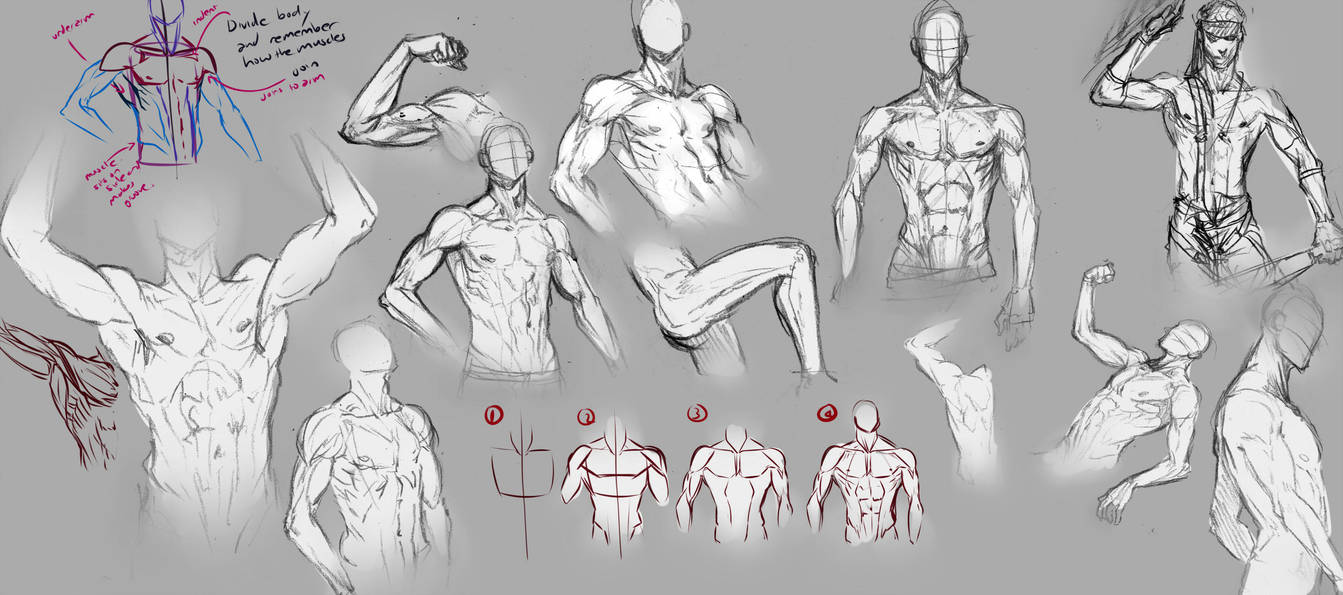 Male Body By Moni158 On Deviantart