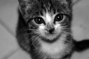 Kitty by ahmetgormez