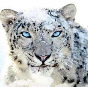 leopardoblanco's Profile Picture