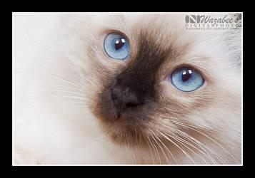 Charlin Closeup by wazabees