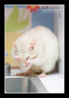 Hiding Rat by wazabees