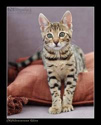Bengal kitten ... by wazabees