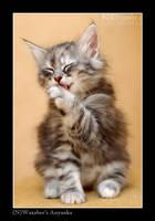 Kitty bath by wazabees