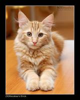 Little kitten Brick by wazabees