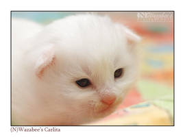 Carlita, two weeks by wazabees