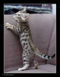 Curiosity by wazabees