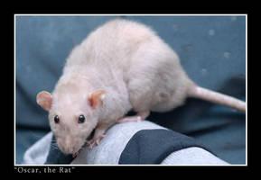 Oscar the Rat 2 by wazabees