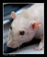 Oscar the Rat 3 by wazabees