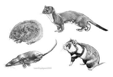 Dutch small Pleictocene mammals digital test by LeenZuydgeest