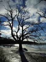 Tree1 by dreamrose-stock