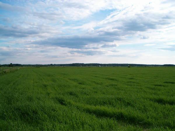 Field by dreamrose-stock