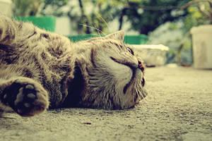 my cat George by koksuel