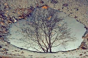 autumn tree by koksuel