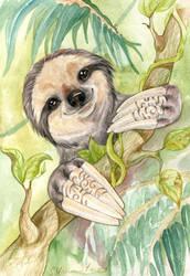 Sloth by DrunkenUnicorn