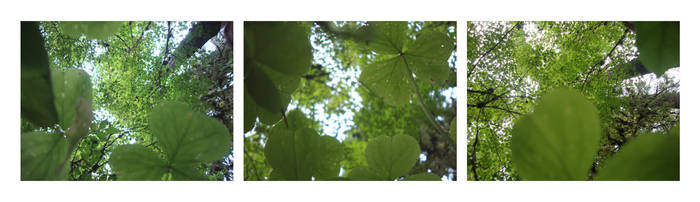 leaves of green by britt-lipy