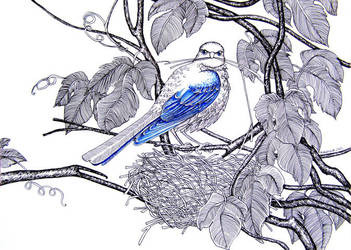 Birds #1 by Calealdarone