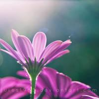 Purple by Jules1983