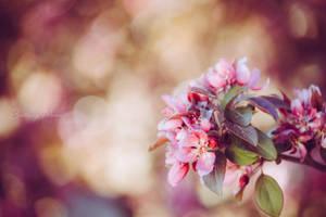 pretty in pink by Ozzkat