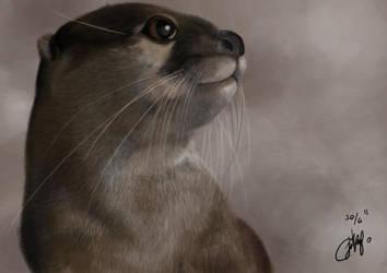 Chiki the Otter by josephinekazuki