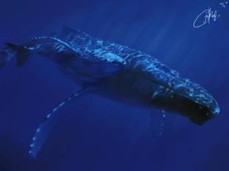 Humpback whale and her calf by josephinekazuki