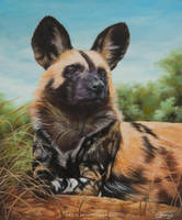 African Wild Dog by josephinekazuki