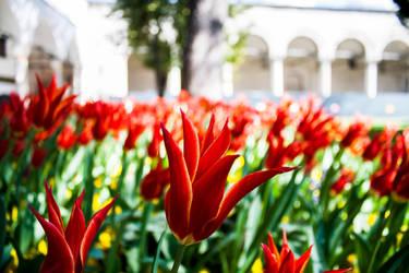Topkapi Palace garden by n0i2