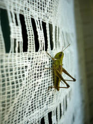 Is this a grass-hopper? by ThinkFrog