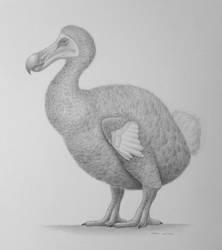 Dodo / Raphus Cucullatus by jm78