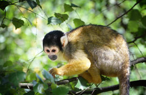 Monkey Business by Nikki-vdp