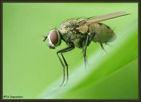 Green Fly by sapog