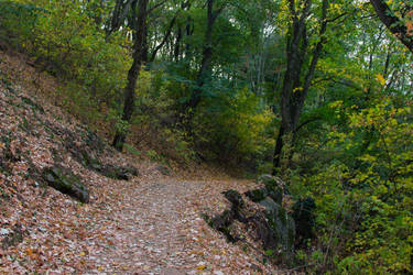 Autumn Woods Path by Anonimus79