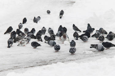 Cold Pigeons by Anonimus79