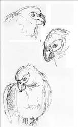 Parrot Drawings by Irishchicky