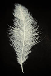feather. by PeanutToTheButter