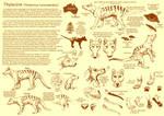 The Thylacine by Mikan-no-Tora
