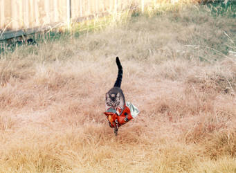 Spoils Of The Hunt by darrakitty
