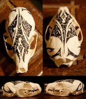 Skull of a marten by ElvensDay
