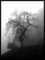 tree by mandragolaa