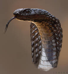 Snake by Lenika86