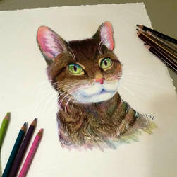 Moses the Tabby by ImmortalTanuki