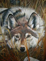Wolf by Xialexi