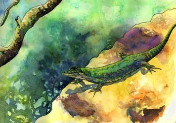 Mljet Lizard - St Mary's Island by Onyana