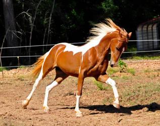 chestnut saddlebred 8 by venomxbaby