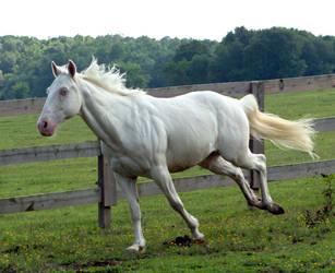 cremello stallion 9 by venomxbaby