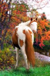 autumn song by venomxbaby
