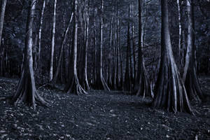 creepy trees stock by venomxbaby