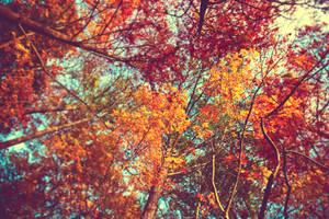 autumn leaves wallpaper by venomxbaby