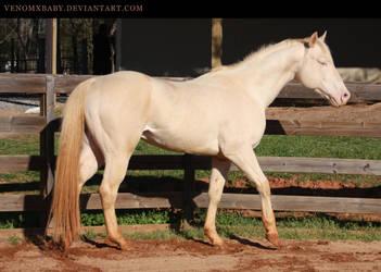 perlino stallion 3 by venomxbaby