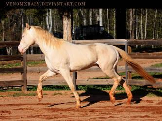 perlino stallion 7 by venomxbaby